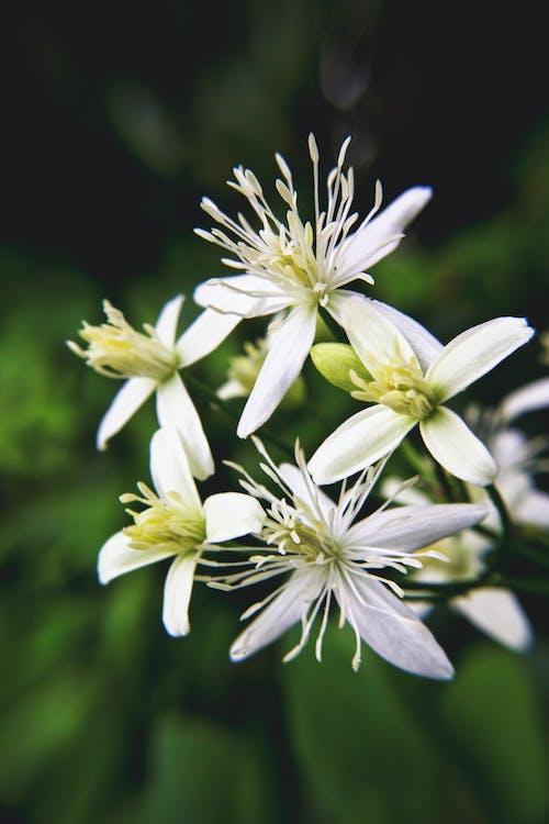 녹색, 하얀 꽃, 하얀색의 무료 스톡 사진