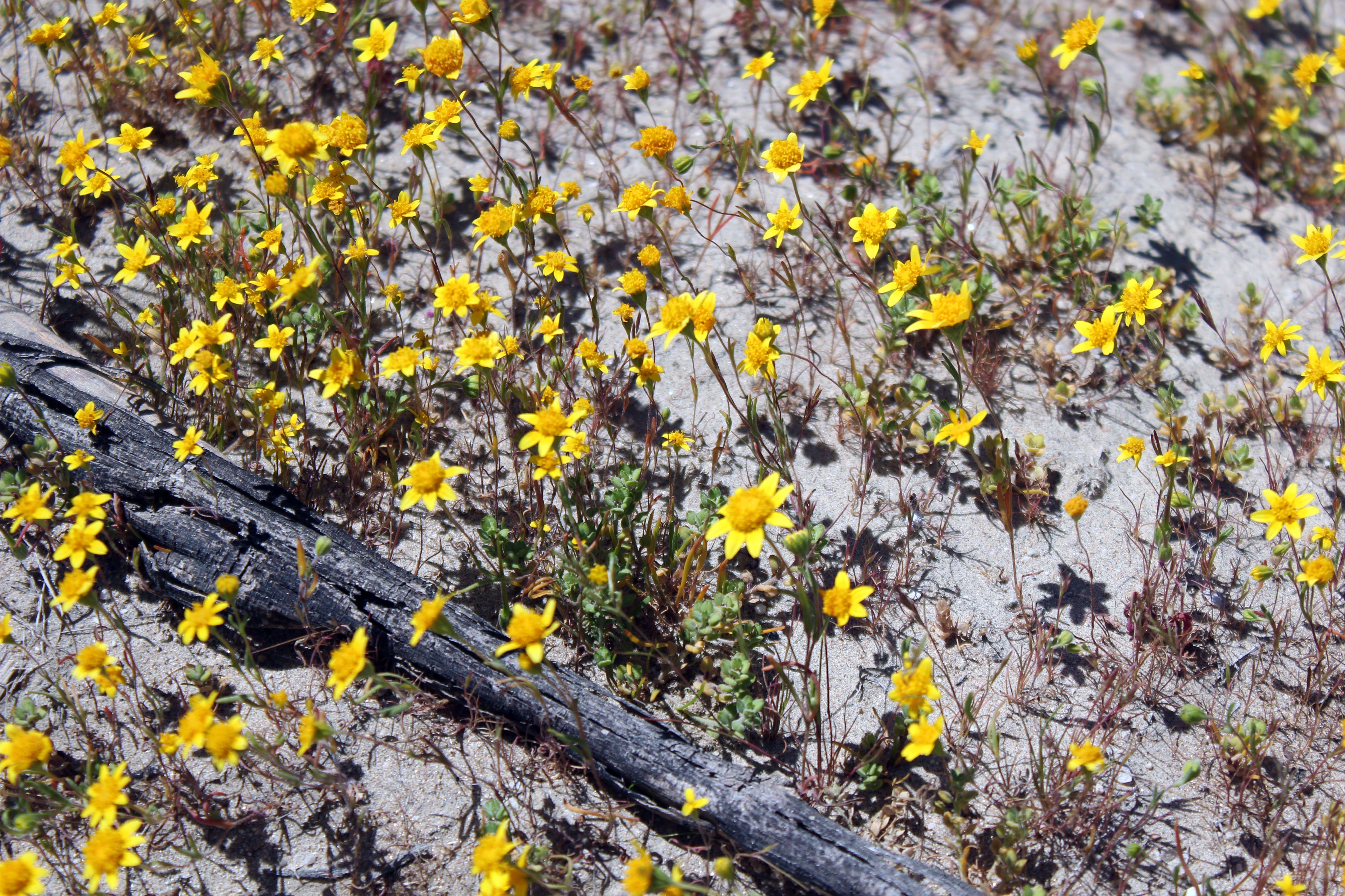 Free stock photo of yellow flowers