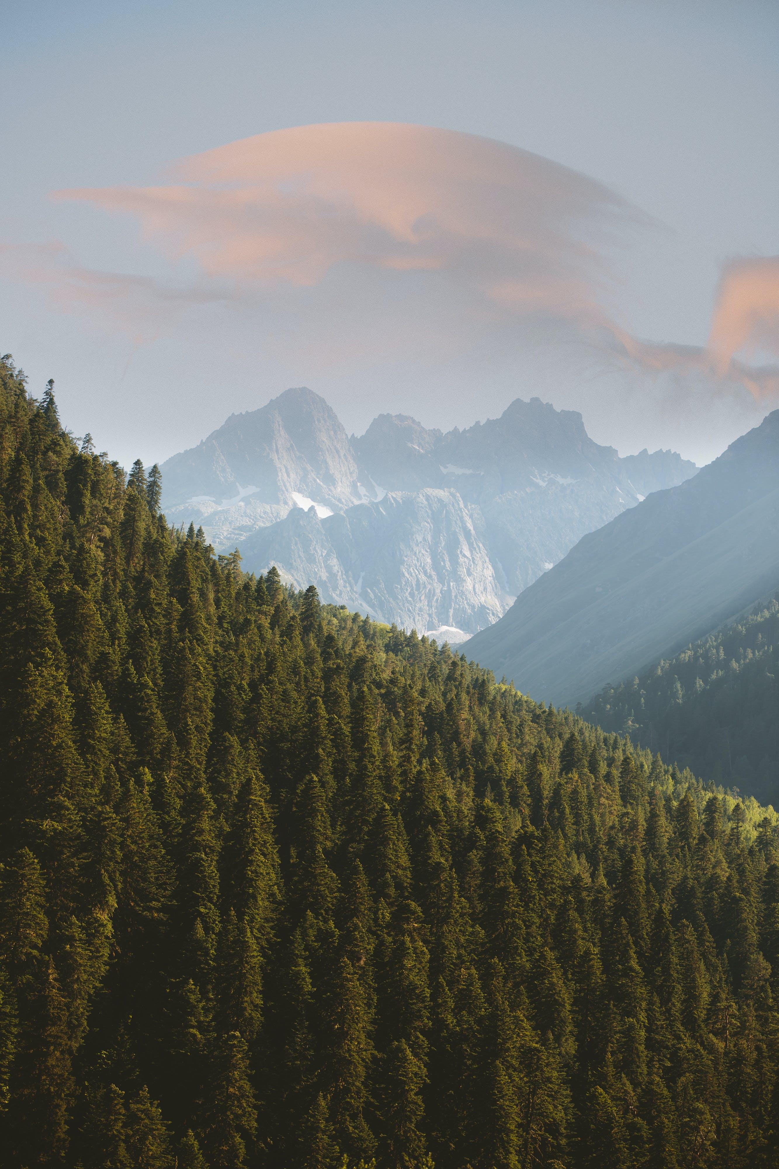 Základová fotografie zdarma na téma hory, krajina, krásný, les