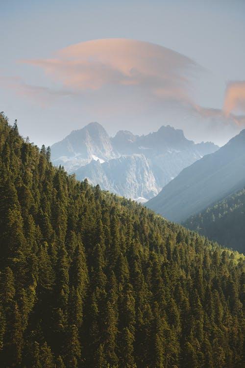Foto stok gratis alam, bagus, hijau abadi, hutan