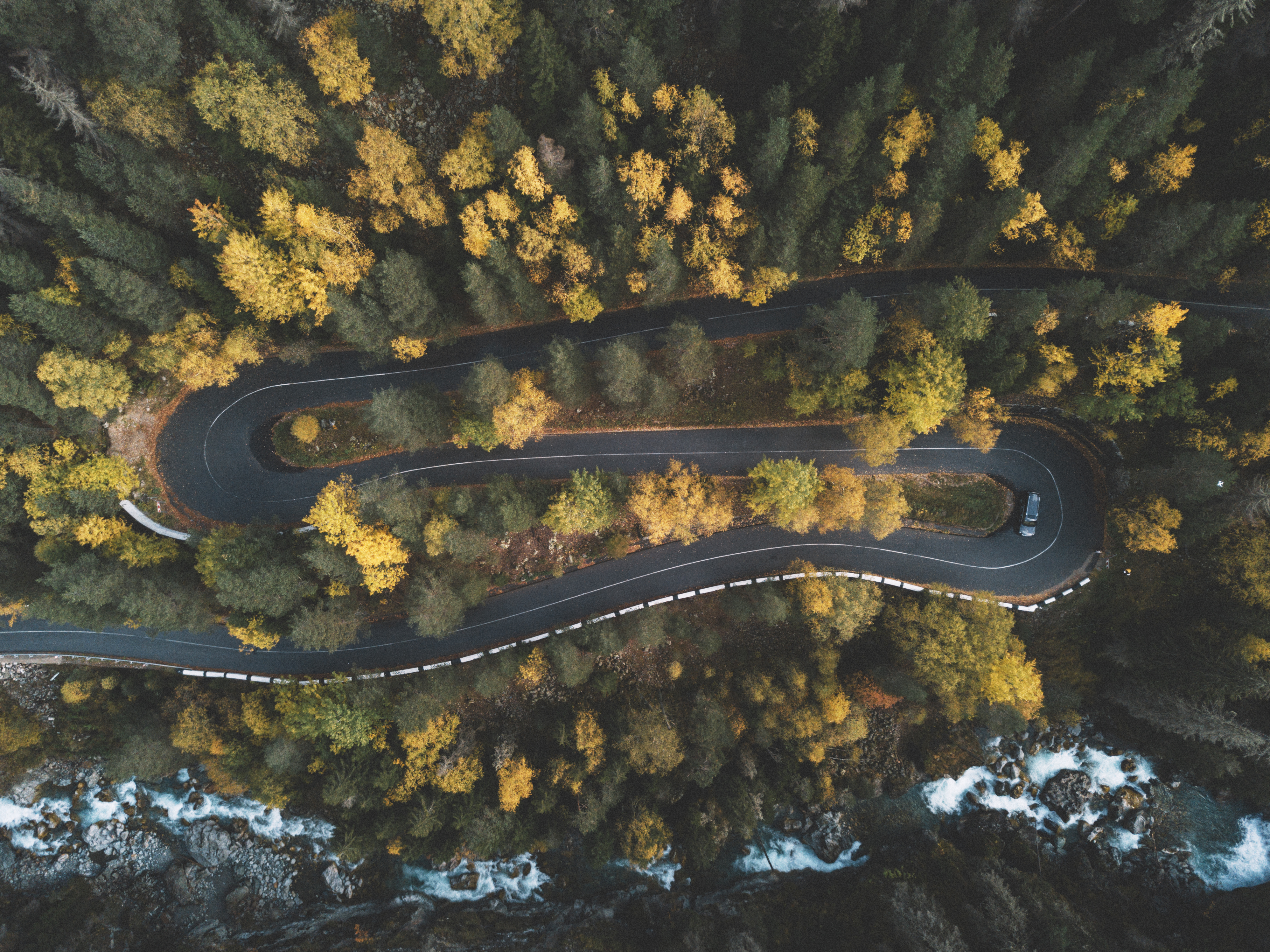 Top View Photo of Curved Road Surrounded by Trees