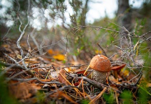 Základová fotografie zdarma na téma houby, les