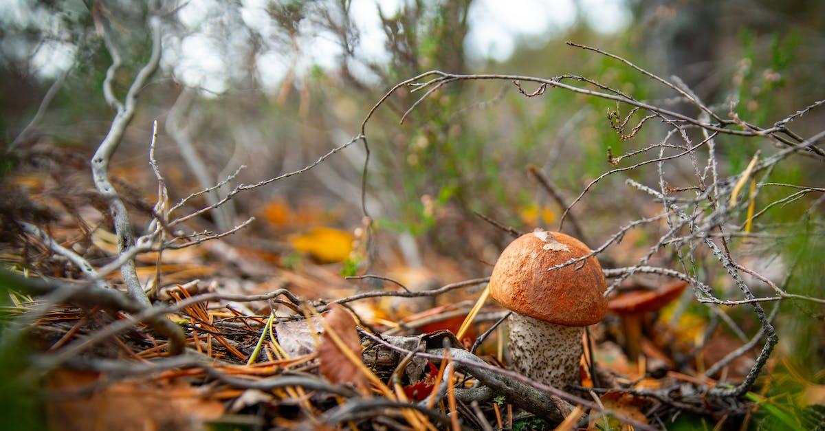 гарантируем грибы русского леса фото перевести километры