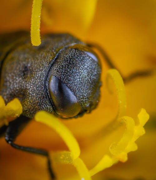 Základová fotografie zdarma na téma brouk, hmyz, kytka, makro