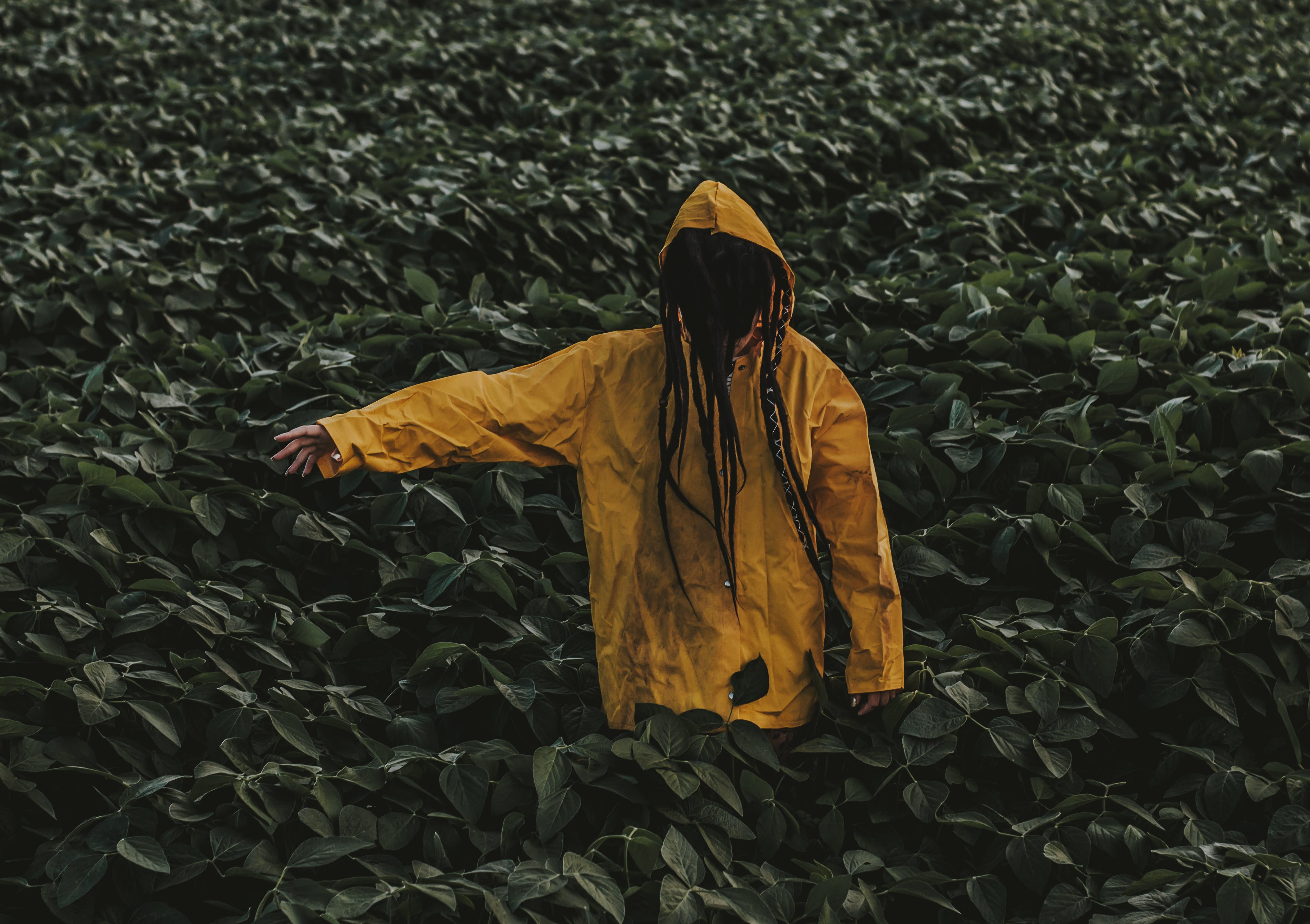 Person Wearing Yellow Raincoat Surrounded by Green Leaf Plants