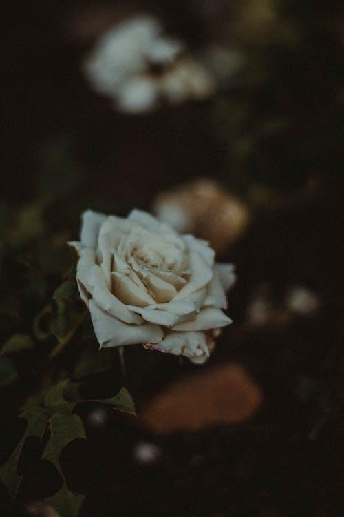 Darmowe zdjęcie z galerii z flora, kwiaty, kwitnięcie, piękny