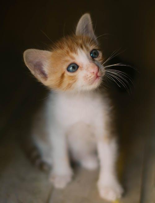 Darmowe zdjęcie z galerii z futro, kociak, kot, kotek
