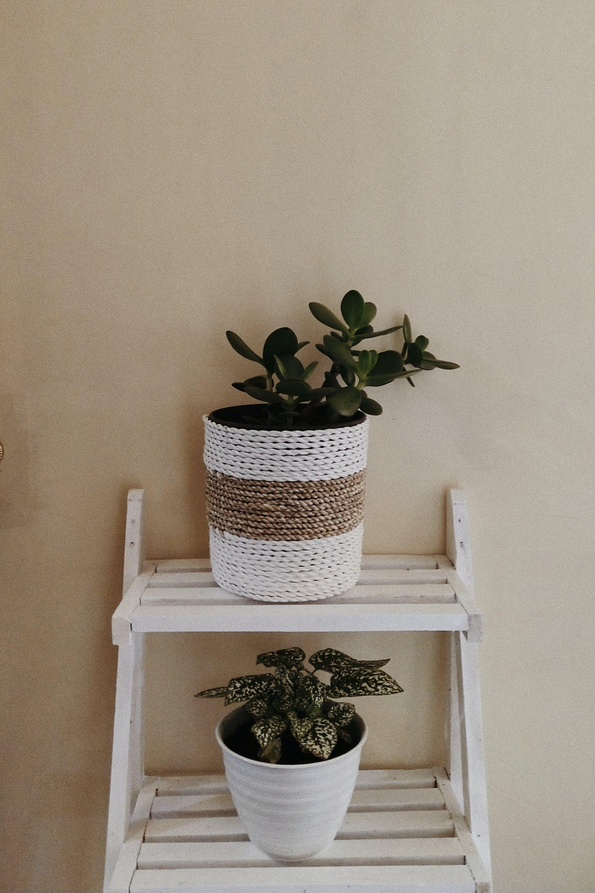 Two Plants In Pots