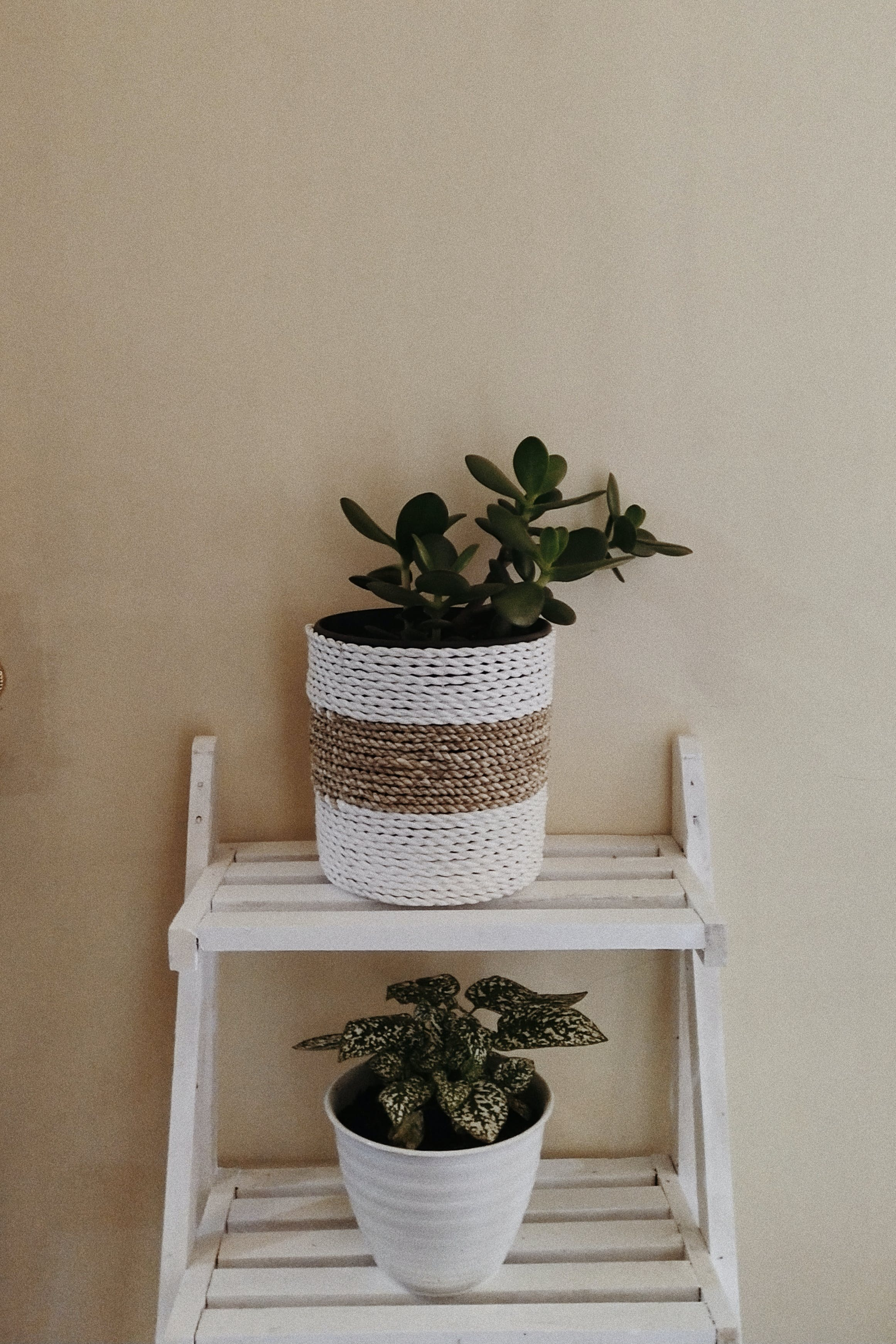 Two Plants In Pots
