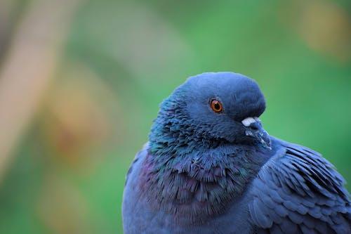 Gratis arkivbilde med blå bakgrunn, due, duer, grå
