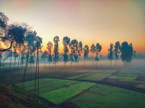 Imagine de stoc gratuită din arbore, ceață, concentrare, copac mare
