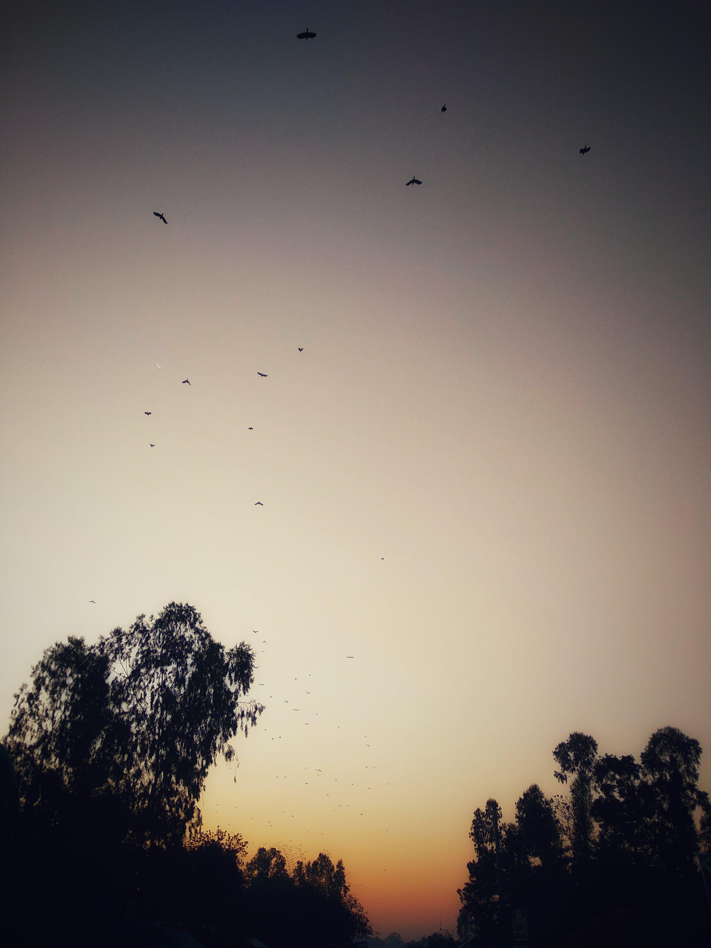 Free stock photo of big tree, birds, blur, border