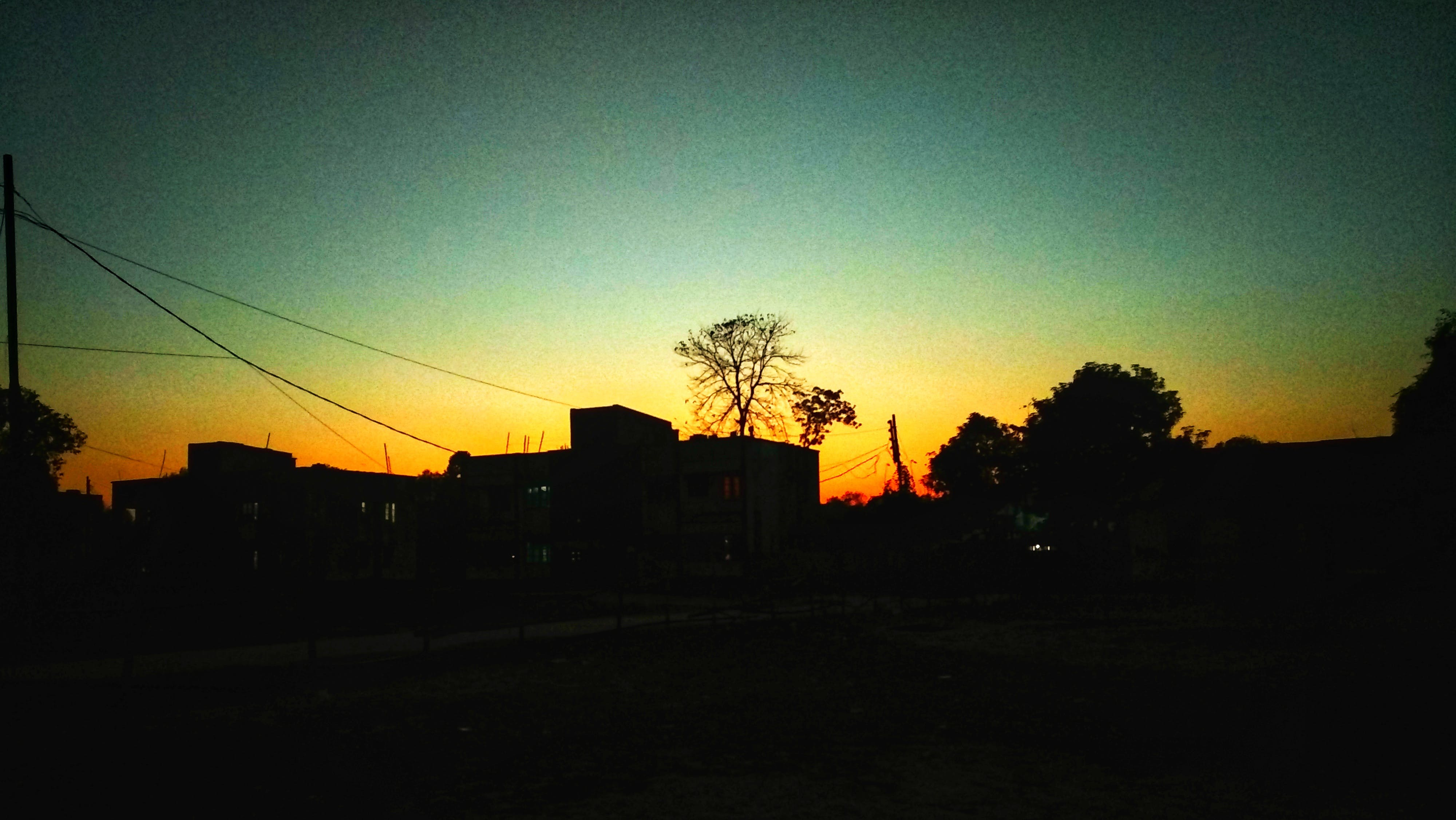 Free stock photo of big tree, blur, border, dark light