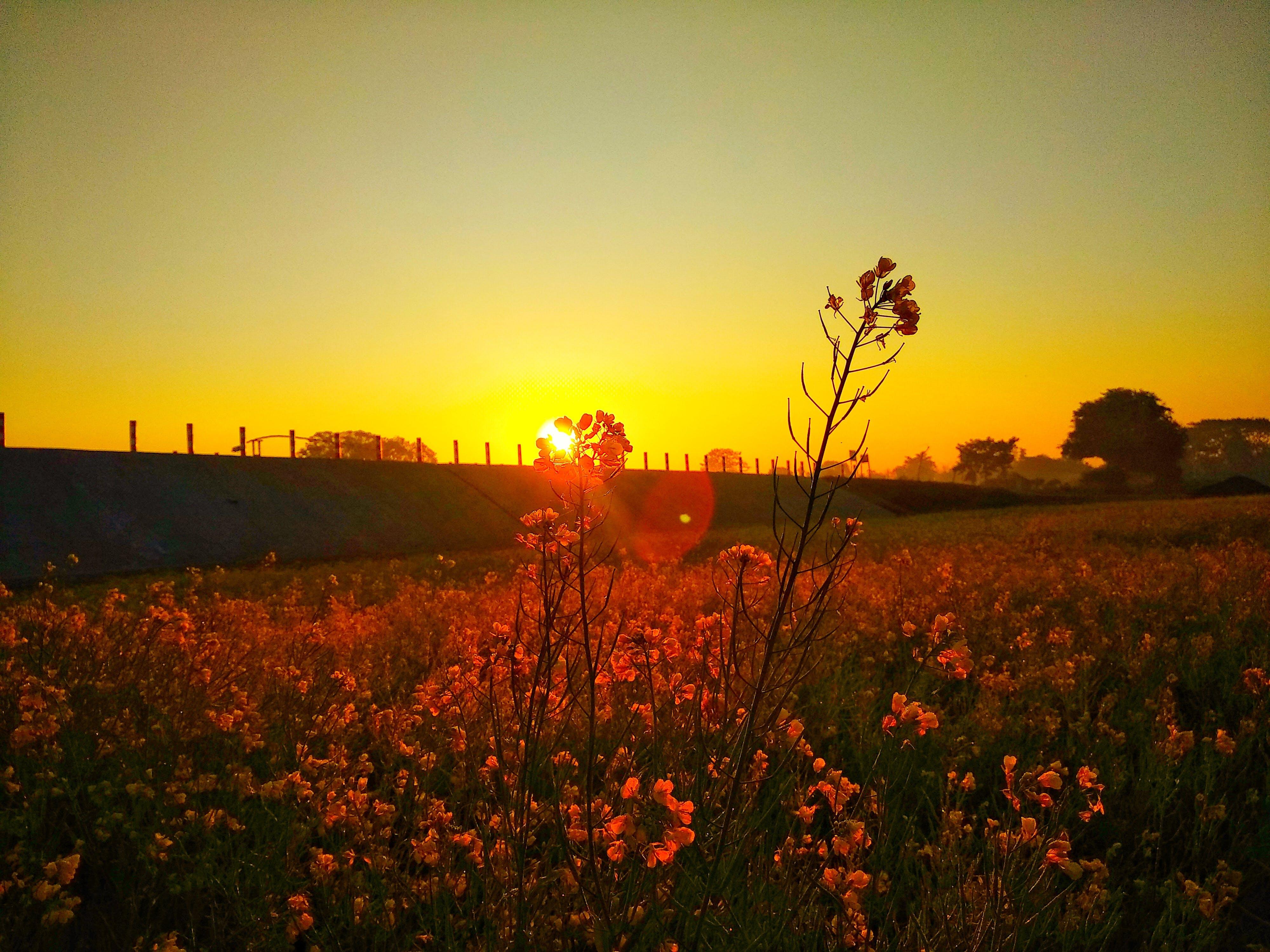 Free stock photo of beauty, blue sky, blur, flower
