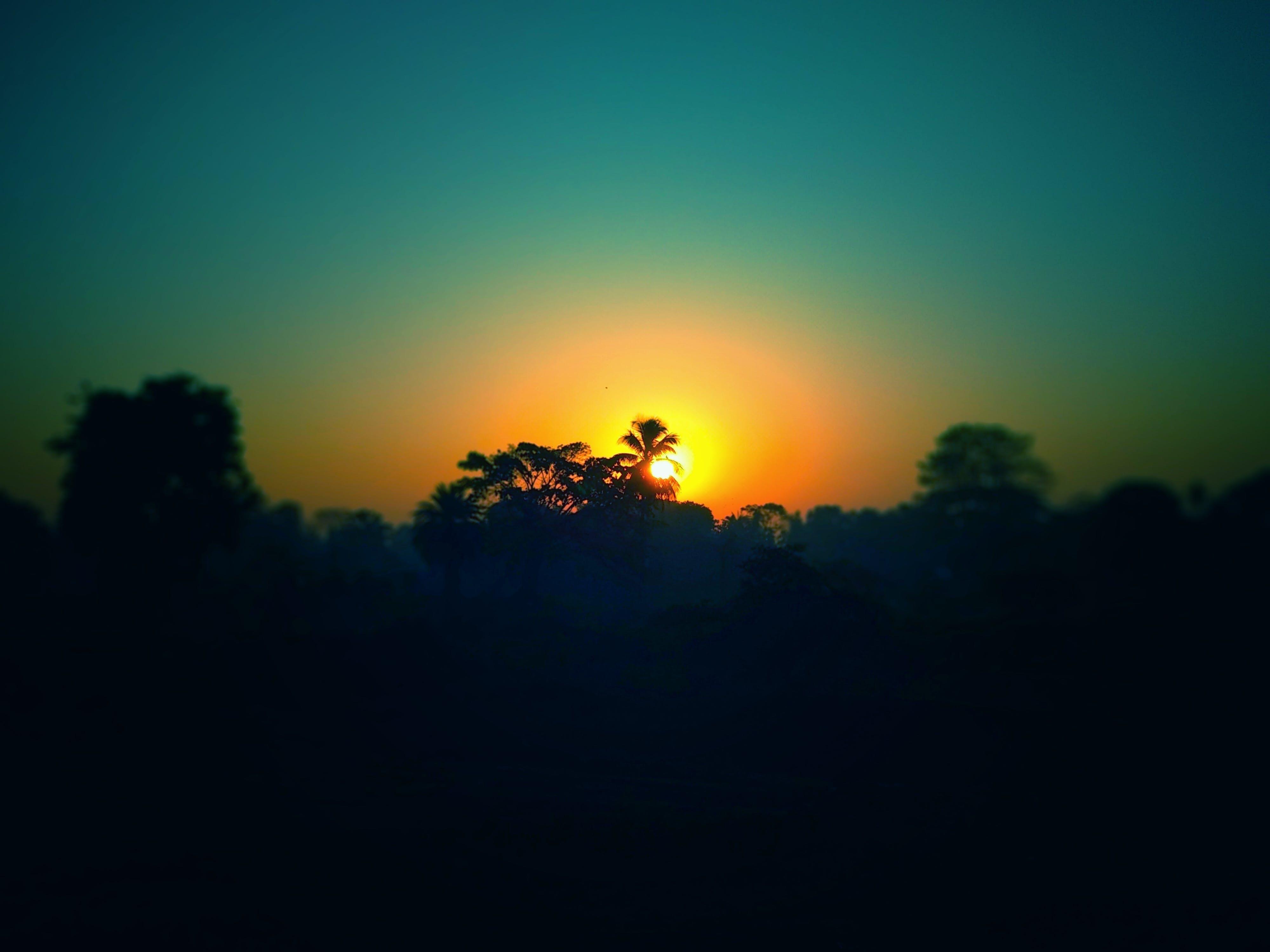 Free stock photo of big tree, blur, border, focus