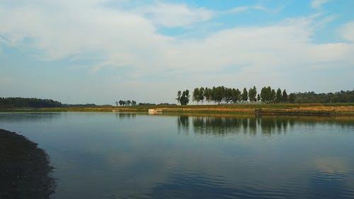 Imagine de stoc gratuită din apă, apă curată, arbore, cer