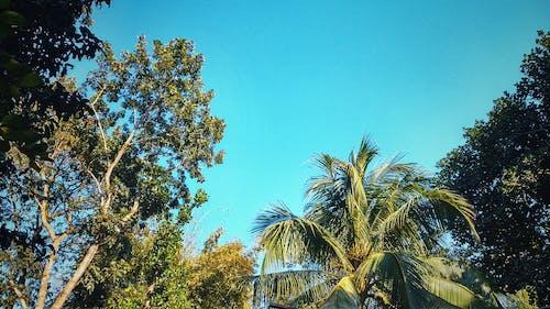 Imagine de stoc gratuită din arbore, cer, cer albastru, floare