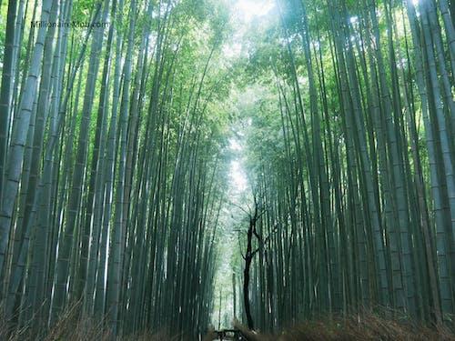 Δωρεάν στοκ φωτογραφιών με arashiyama, kyoto, γιαπωνέζικη κουλτούρα, γιαπωνέζικος