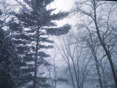 Δωρεάν στοκ φωτογραφιών με δασικός, δέντρα, δέντρο, κρύο