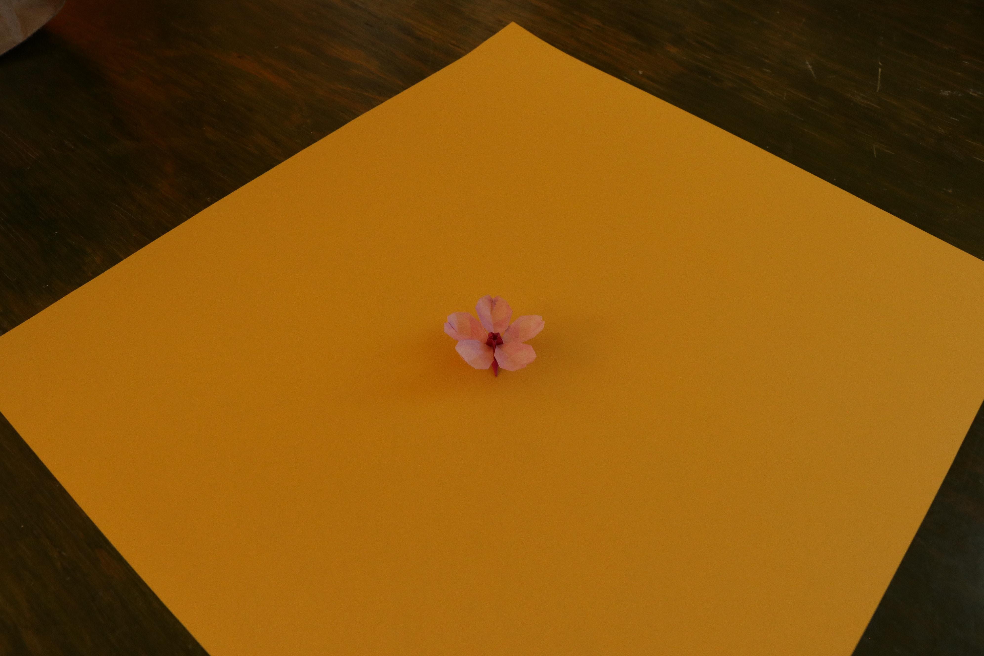 Download 64 Gambar Bunga Sakura Orange Paling Cantik