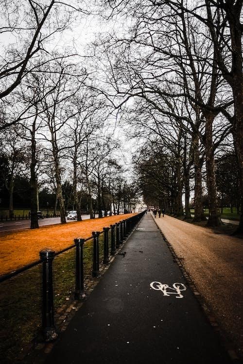 Empty Road Near Trees