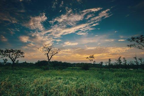 Gratis stockfoto met achtergrondlicht, avond, blauw, bomen