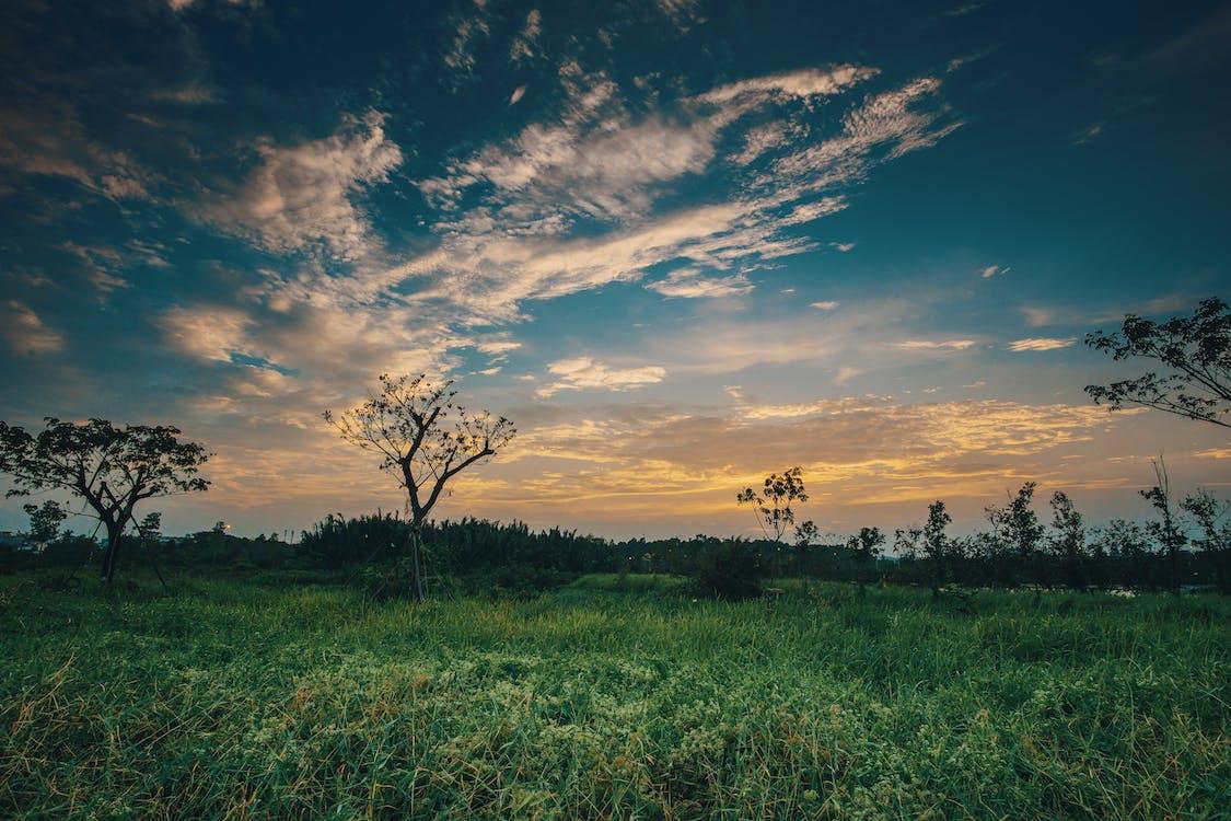 a l'aire lliure, agricultura, alba