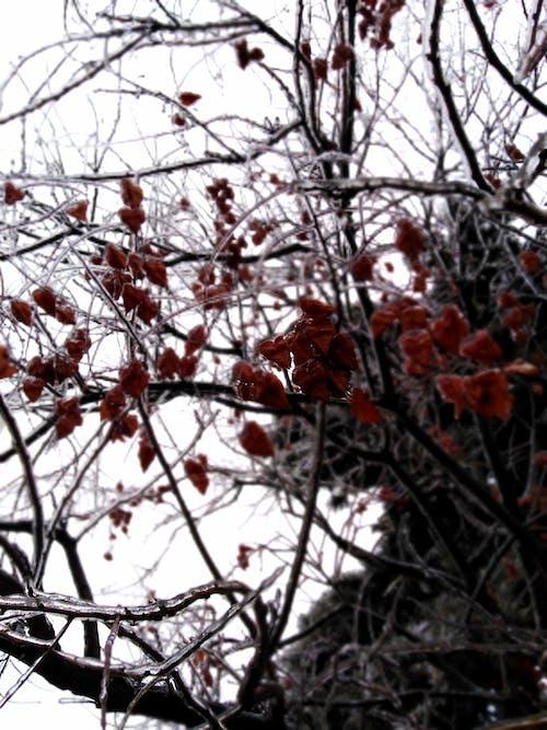 Free stock photo of Nature in winter season, Three challange