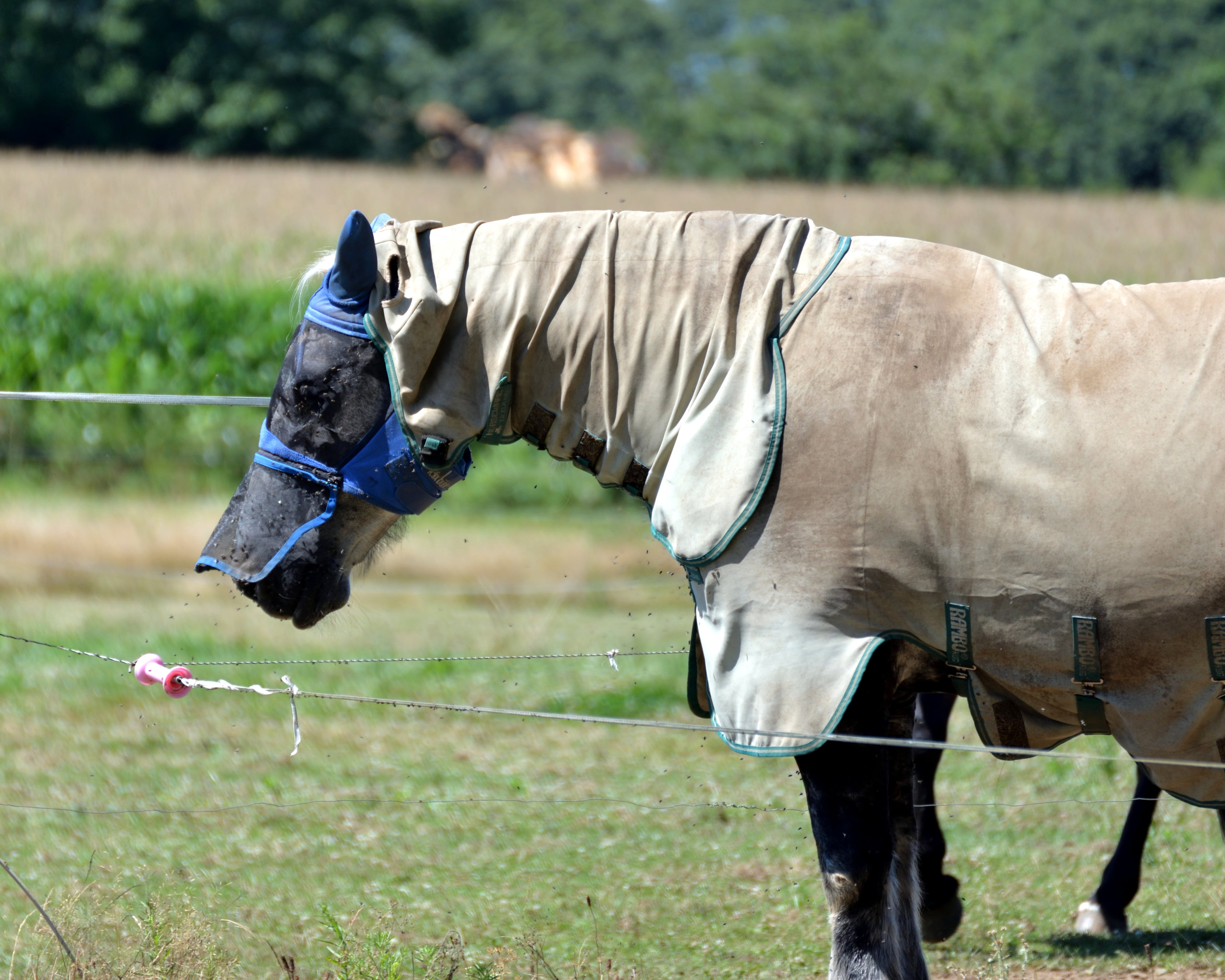 Free stock photo of animal, animalier, cheval, élevage