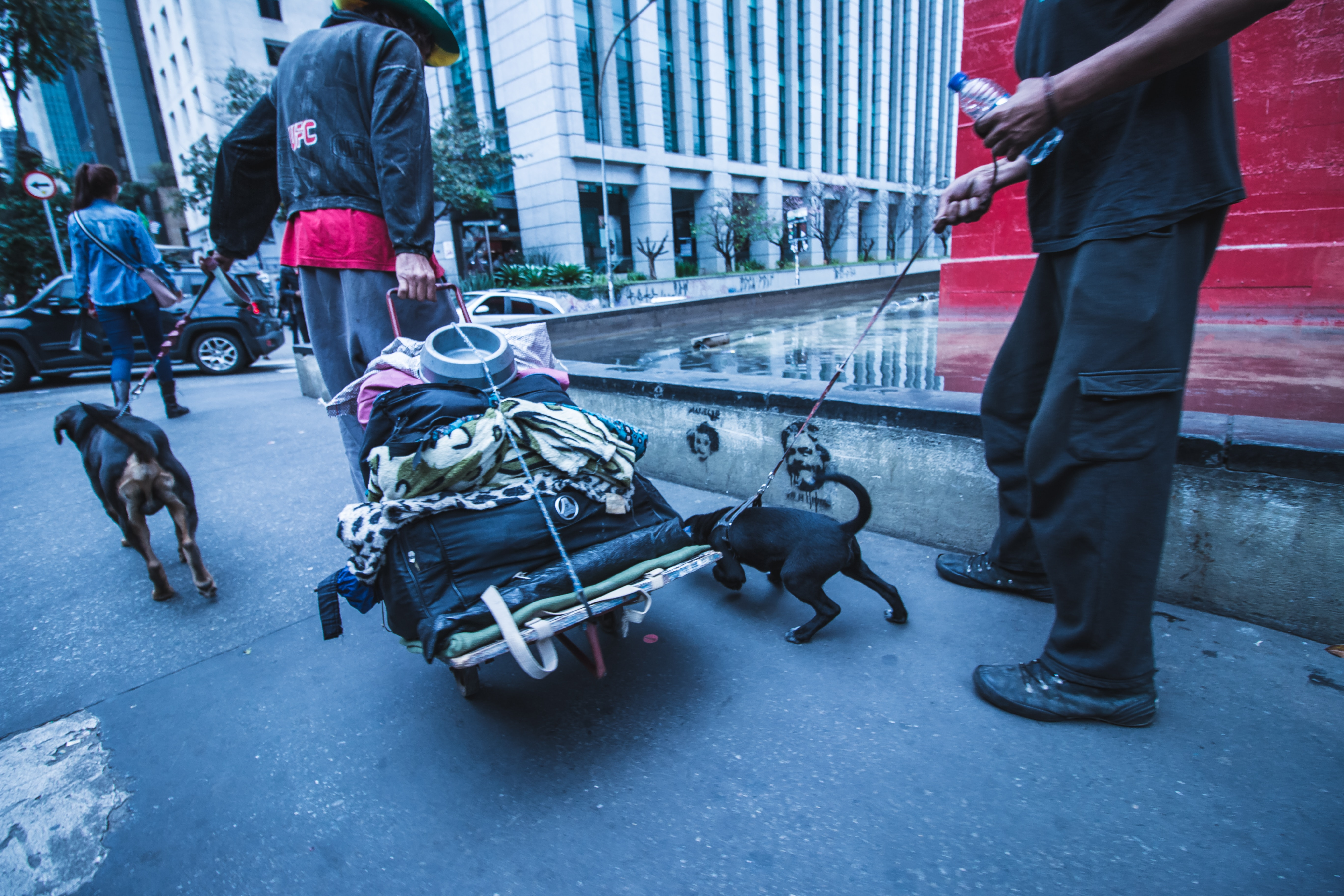 Free stock photo of busy street, dog, person