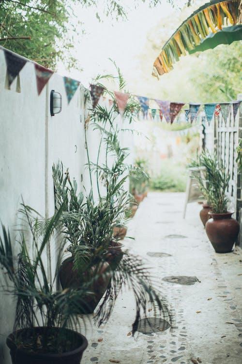Gratis stockfoto met architectuur, binnenkomst, binnenplaats, bloemen