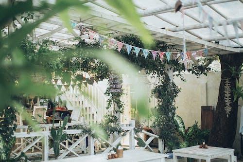 Бесплатное стоковое фото с вымпелы, деревья, дневной свет, мебель