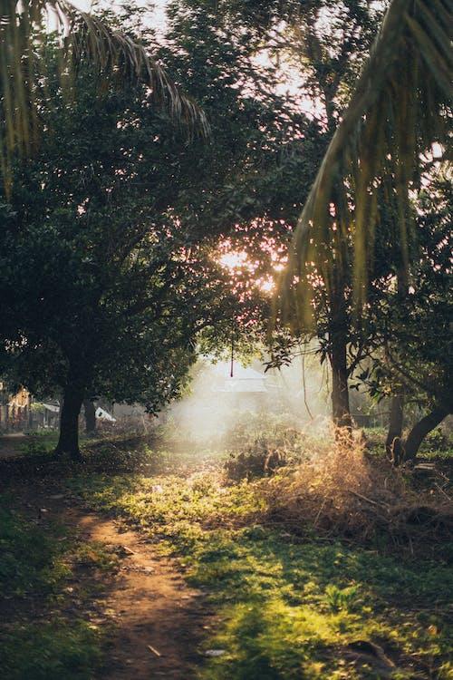 Immagine gratuita di alba, albero, ambiente, bellissimo
