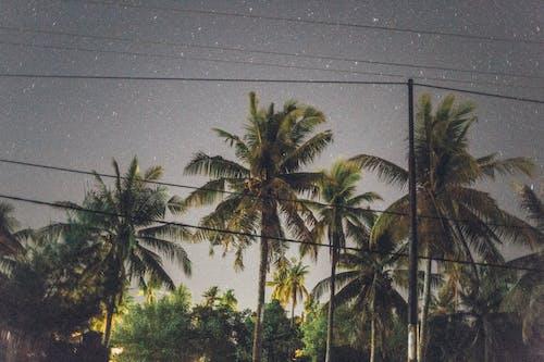 Бесплатное стоковое фото с деревья, звезды, кокосовые пальмы, пальмовые деревья