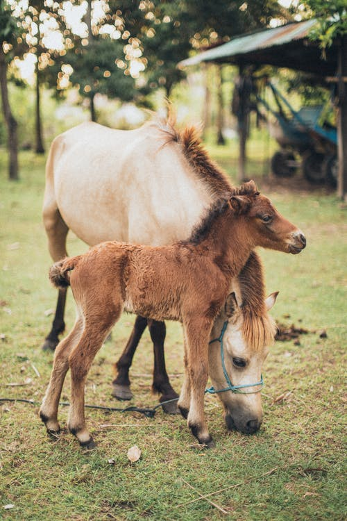 Horse And Foal At Field