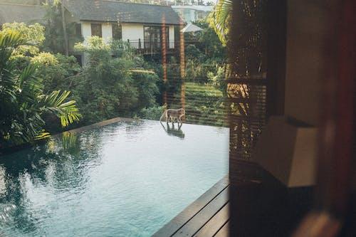 猴子在游泳池边散步