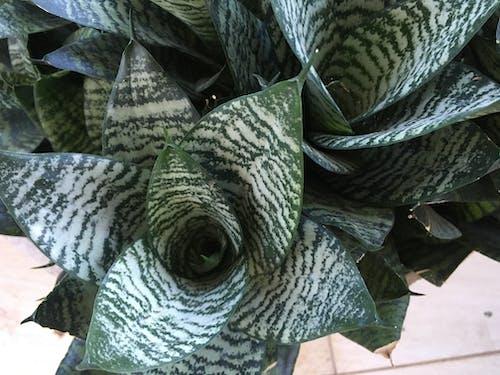 Immagine gratuita di botanico, giardino, verde