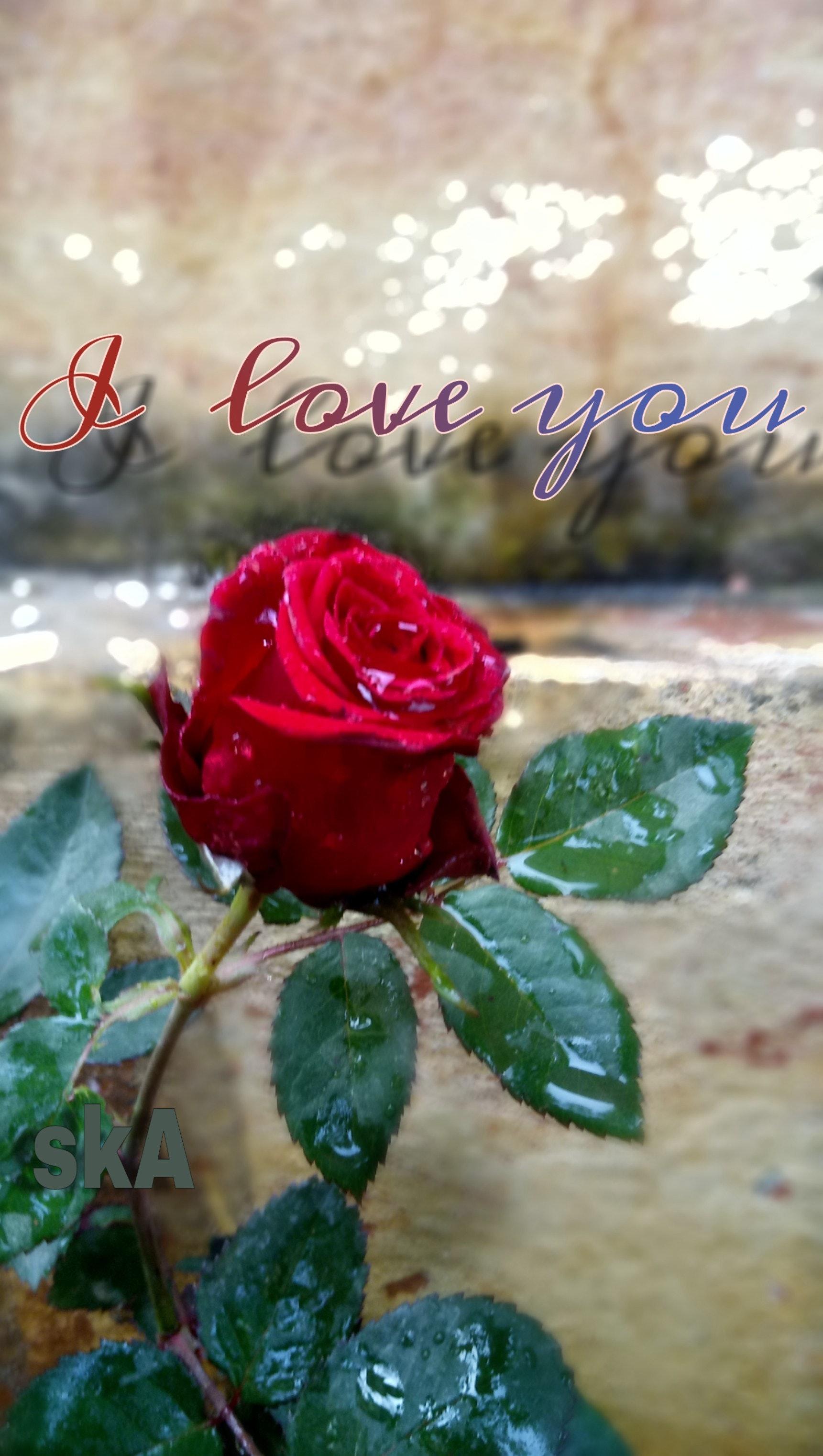 Kostenloses Foto Zum Thema Ich Liebe Dich Rote Rose