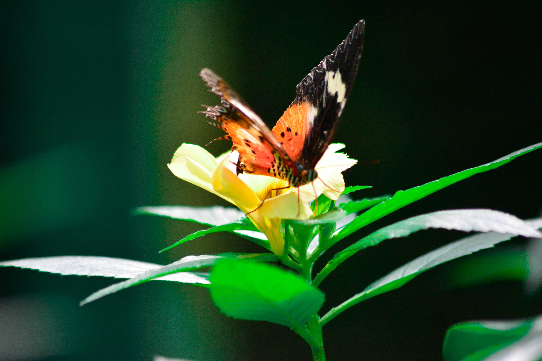 Free stock photo of beauty in nature, butterflies, butterfly, butterfly on a flower