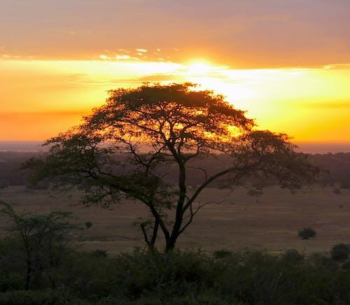 Gratis lagerfoto af afrika solnedgang