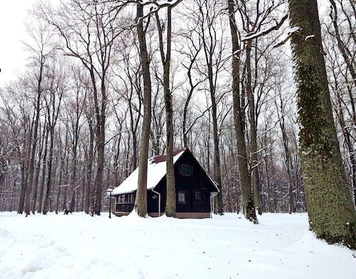 Imagine de stoc gratuită din iarnă, lemn, zăpadă