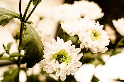 Foto d'estoc gratuïta de flor, flor blanca, natura, natural