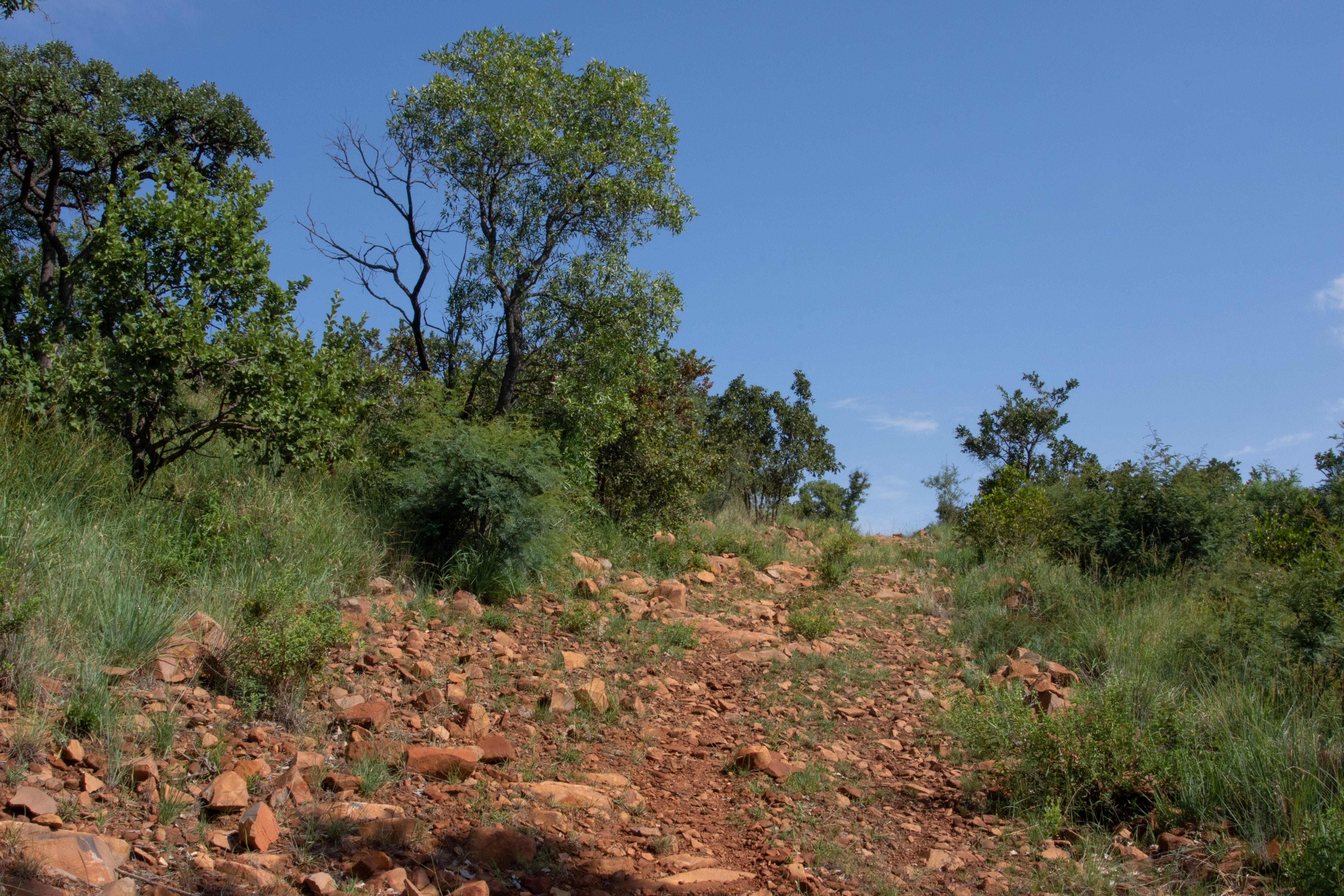 of adventure, beauty in nature, blue sky, bushveld