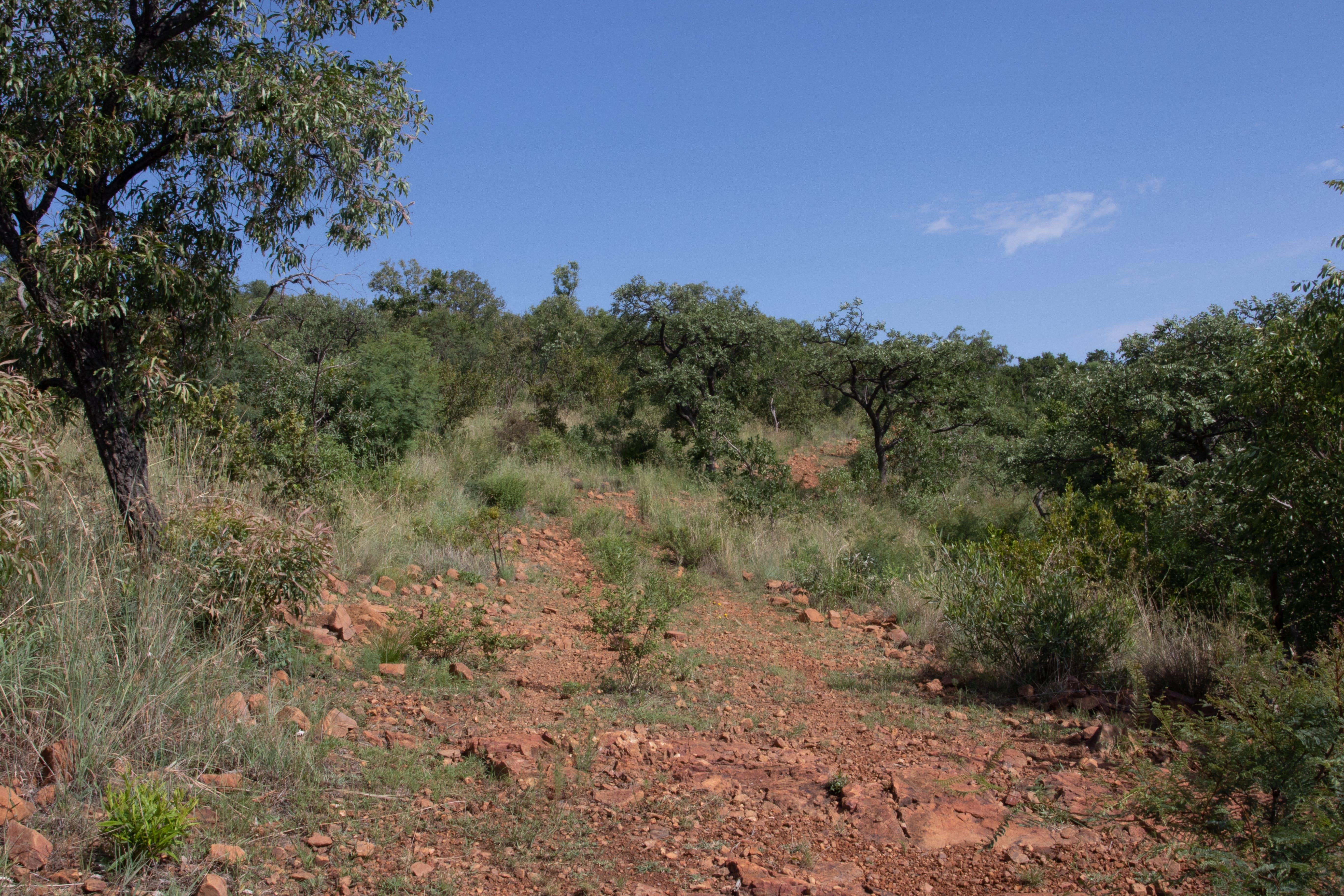 Free stock photo of adventure, beauty in nature, blue sky, bushveld