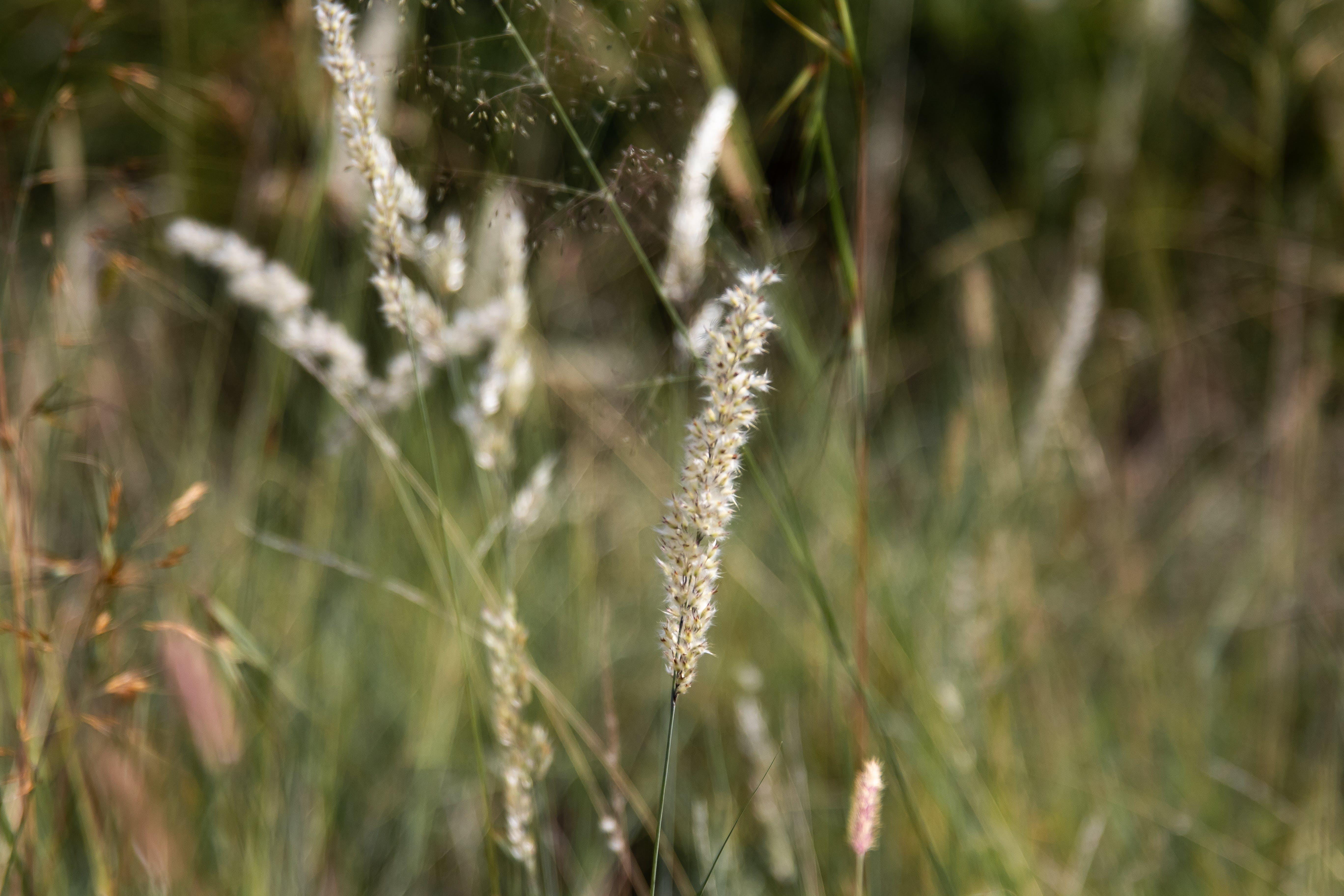 of background, bush, grass, nature
