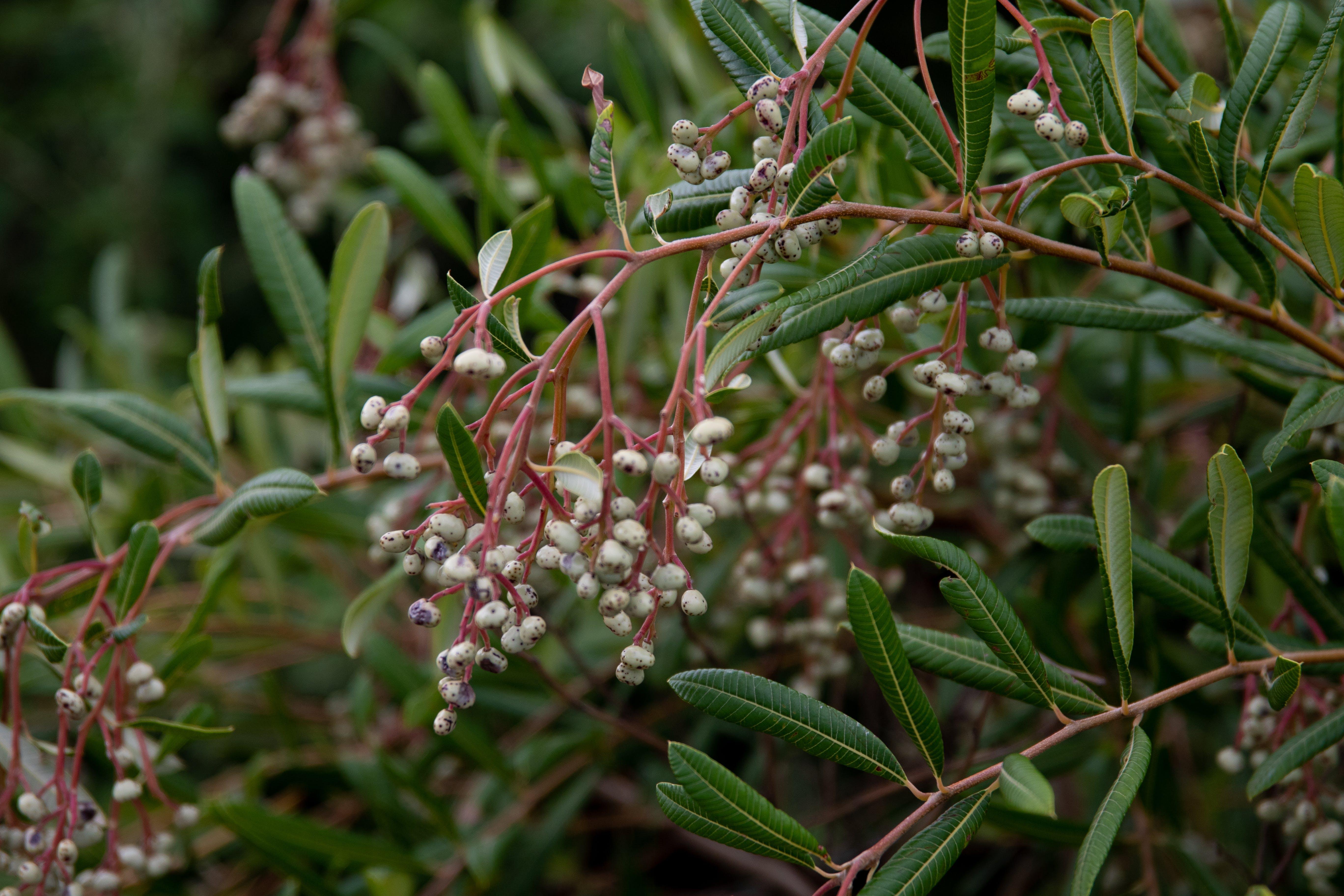 Free stock photo of bush, grass, nature, plants
