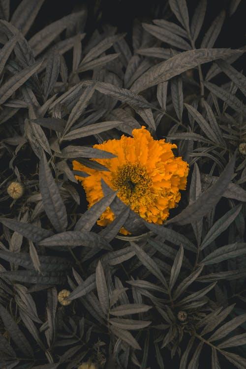 Free stock photo of beautiful flower, dark green plants, flowers, green