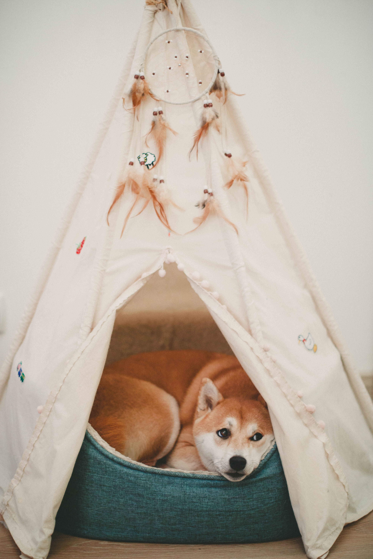 Photo of Dog Lying on Bed