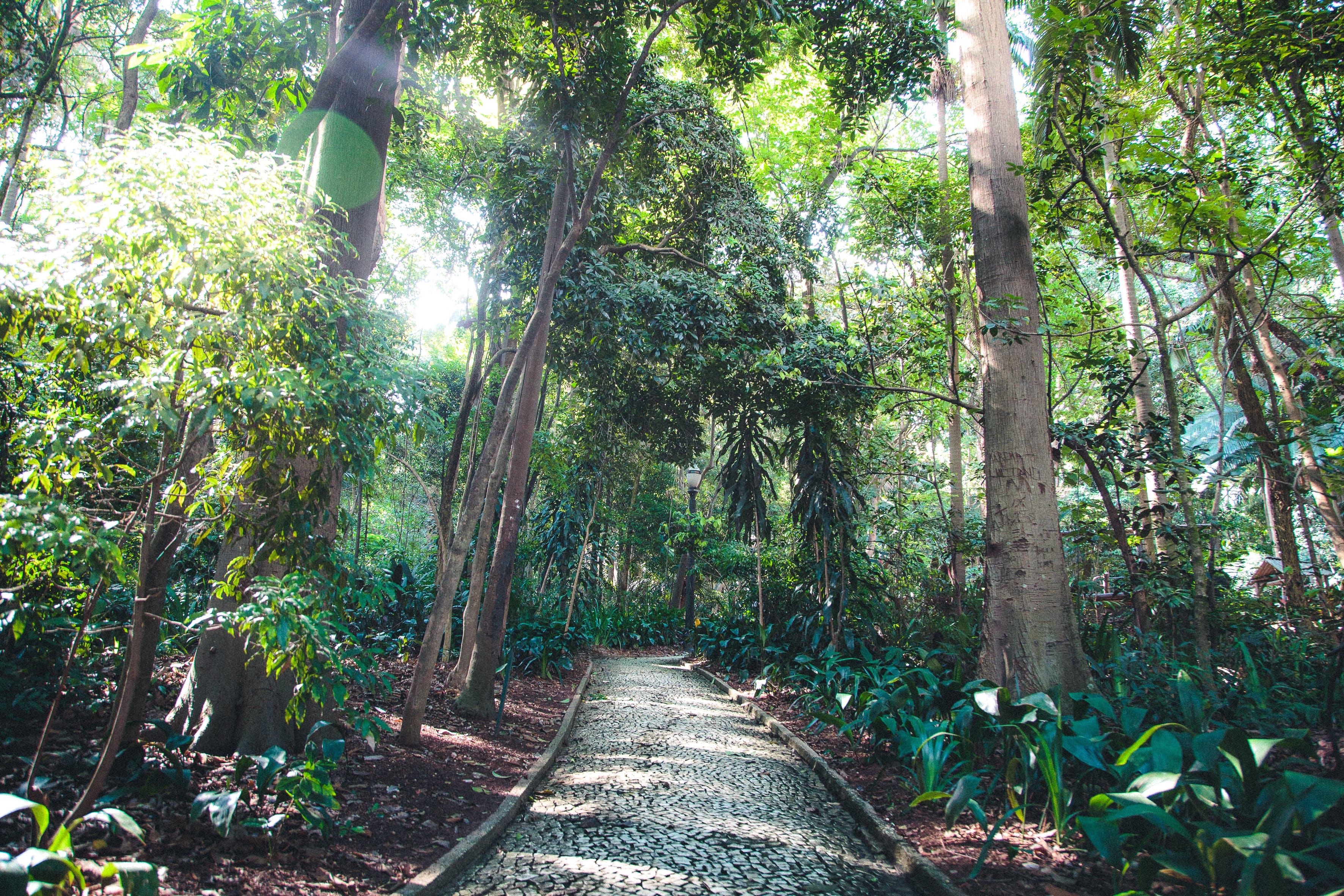 Pathway Underneath Trees