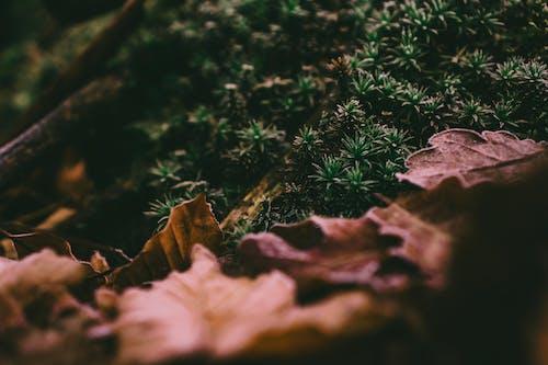 Kostenloses Stock Foto zu boden, gras, nahansicht, natur